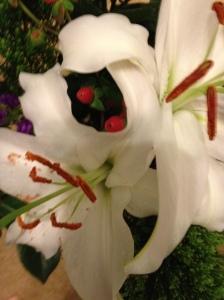 Lilies wide open!